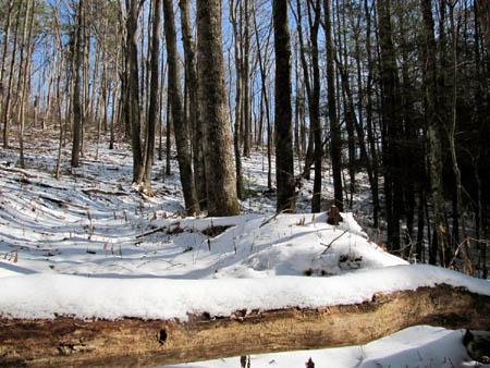 Trail near the gap